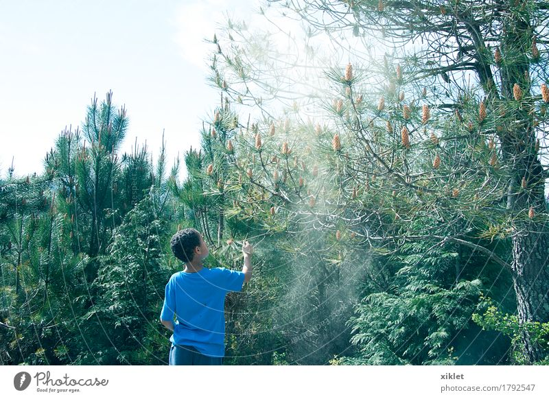 tree boy Tree Boy (child) Forest Freedom Blue Infancy Happy Light Shadow Green Earth Pine Playing Reflection Colour Summer Sun Dust Pollen Seed Allergy