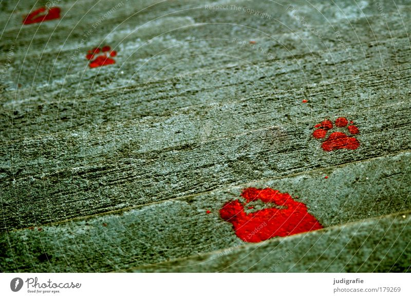 tracks Colour photo Exterior shot Day Life Feet Art Work of art Stairs Concrete Sign Red Tracks Footprint Human being Animal Paints and varnish