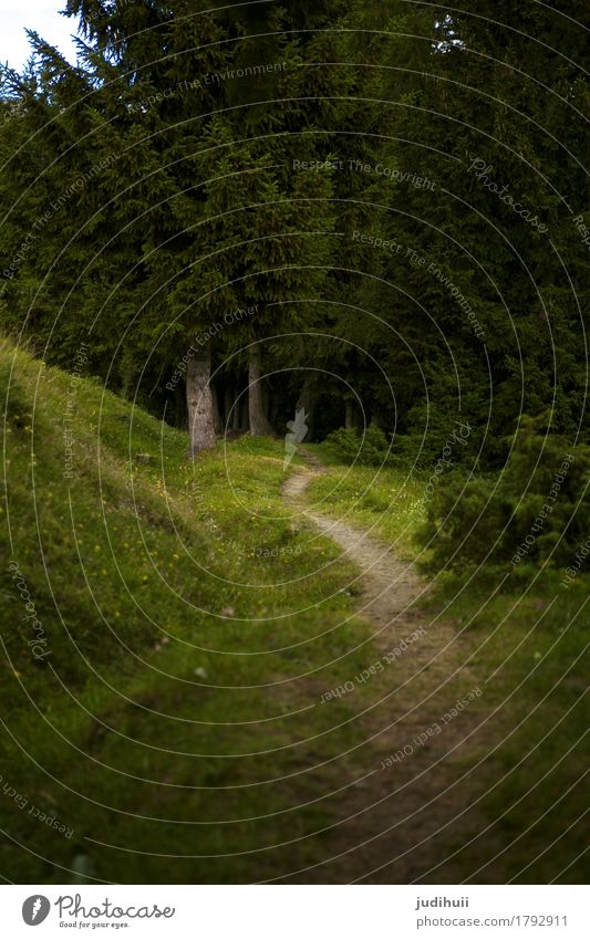 beaten path Hunting Adventure Hiking Agriculture Forestry Environment Nature Landscape Plant Animal Tree Meadow Deserted Footpath Lanes & trails Going Threat