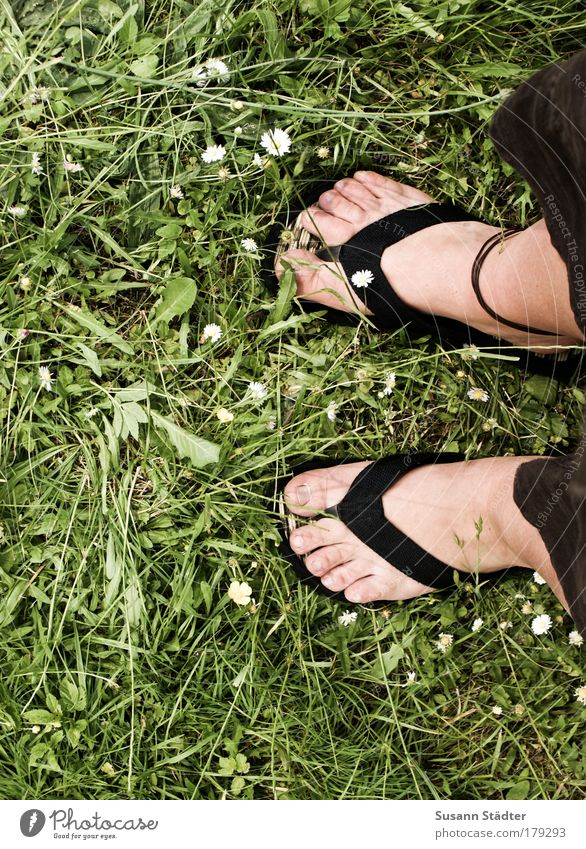 Sun Plant Summer Animal Meadow Feminine Garden Feet Park Warmth Legs Going Footwear Dandelion Beautiful weather Daisy