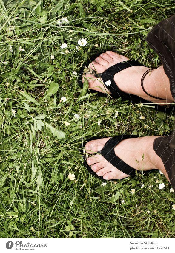 Sun Plant Summer Animal Meadow Feminine Garden Feet Park Warmth Legs Going Footwear Dandelion Beautiful weather Daisy