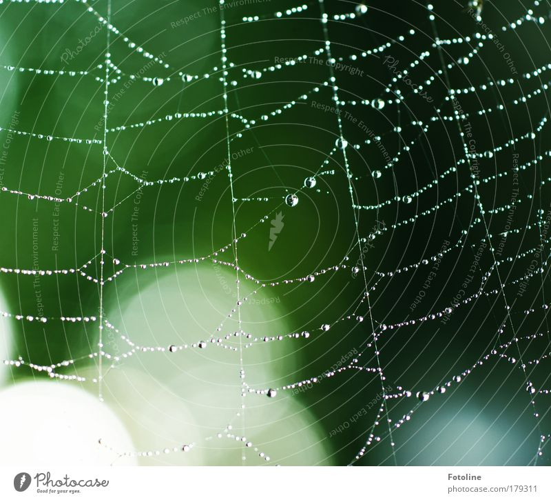 Nature Water Green Tree Plant Animal Environment Meadow Park Weather Wet Drops of water Beautiful weather Spider