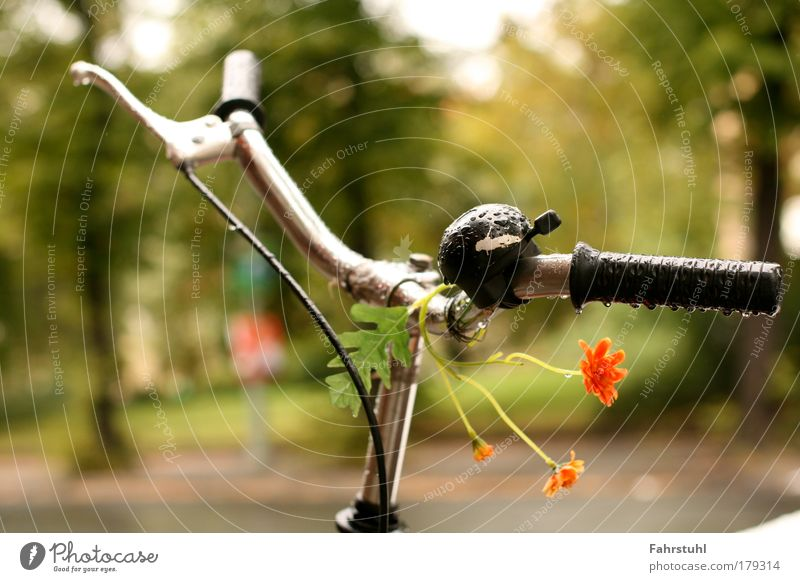 handlebar flowers Colour photo Exterior shot Deserted Day Shallow depth of field Central perspective Transport Street Mobility Exceptional