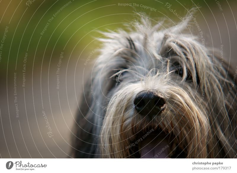 Joy Animal Playing Dog Contentment Dirty Nose Happiness Joie de vivre (Vitality) Pelt Cute Friendliness Odor Expectation Pet Tongue