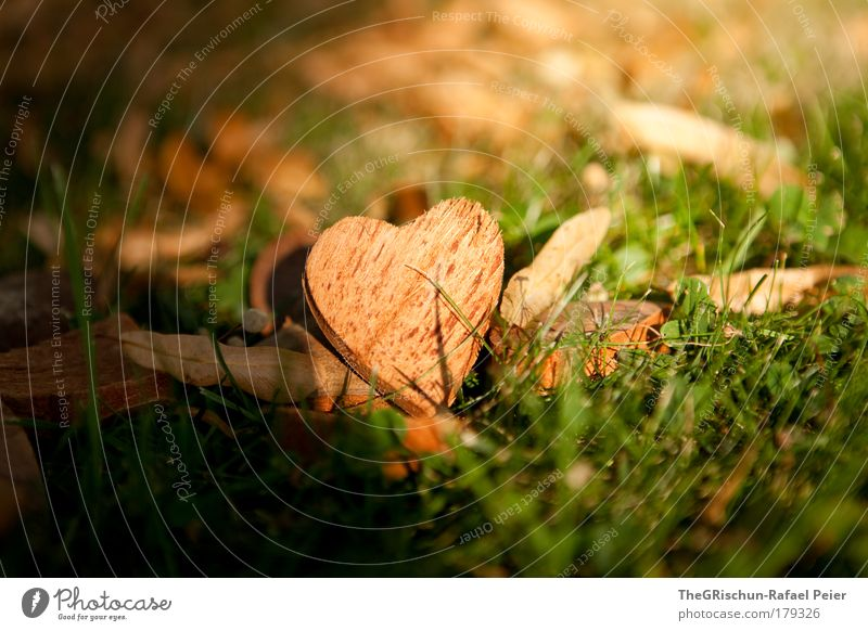 Nature Beautiful Green Plant Love Emotions Grass Mountain Wood Brown Heart Environment Esthetic Cool (slang) Romance Authentic