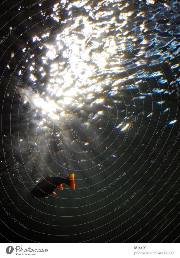 Water Ocean Animal Dark Emotions Freedom Lake Bright Waves Wet Fresh Fish Zoo Illuminate Aquarium