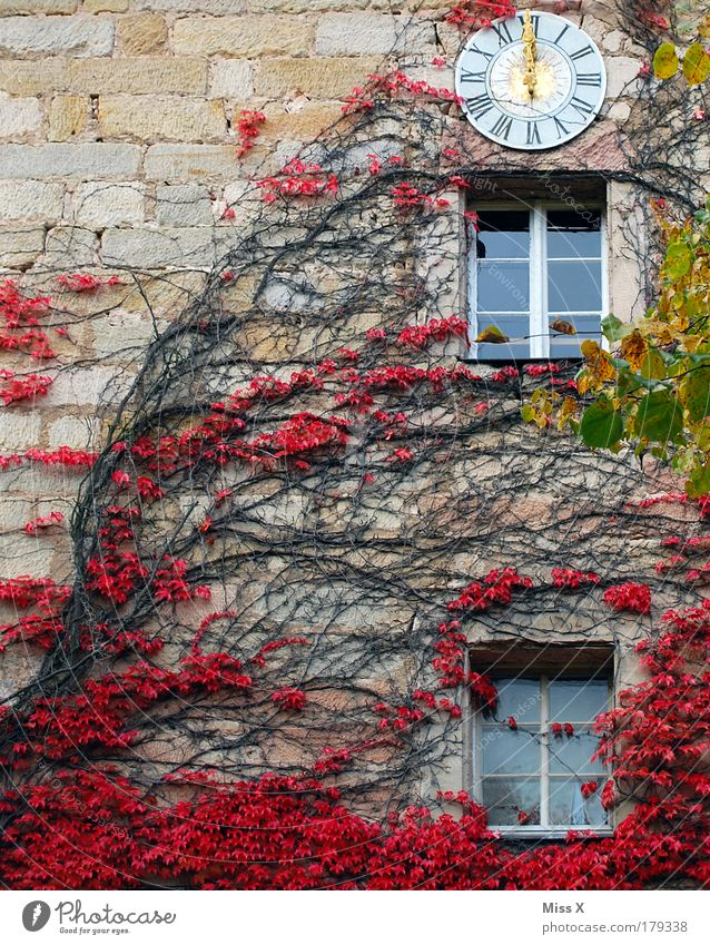 Nature Plant Red Leaf House (Residential Structure) Cold Autumn Wall (building) Garden Wall (barrier) Park Trip Growth Church Bushes Clock