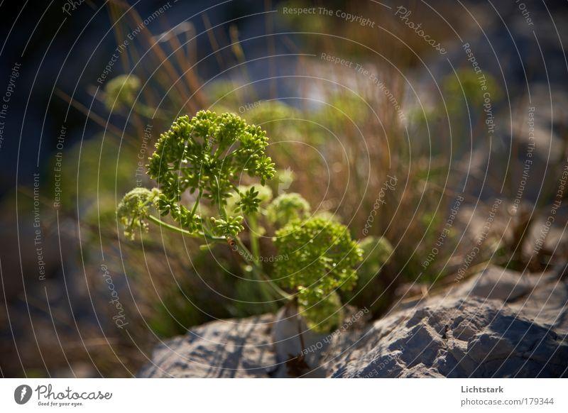 Green Plant Calm Nutrition Animal Autumn Stone Sand Coast Healthy Environment Rock Fresh Esthetic Growth Peace