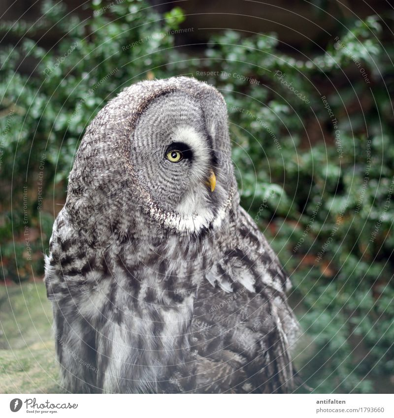 What are you looking at? Tourism Trip Nature Summer Autumn Tree Bushes Leaf Park Animal Wild animal Animal face Wing Zoo Eagle owl Owl birds Feather Beak Eyes 1