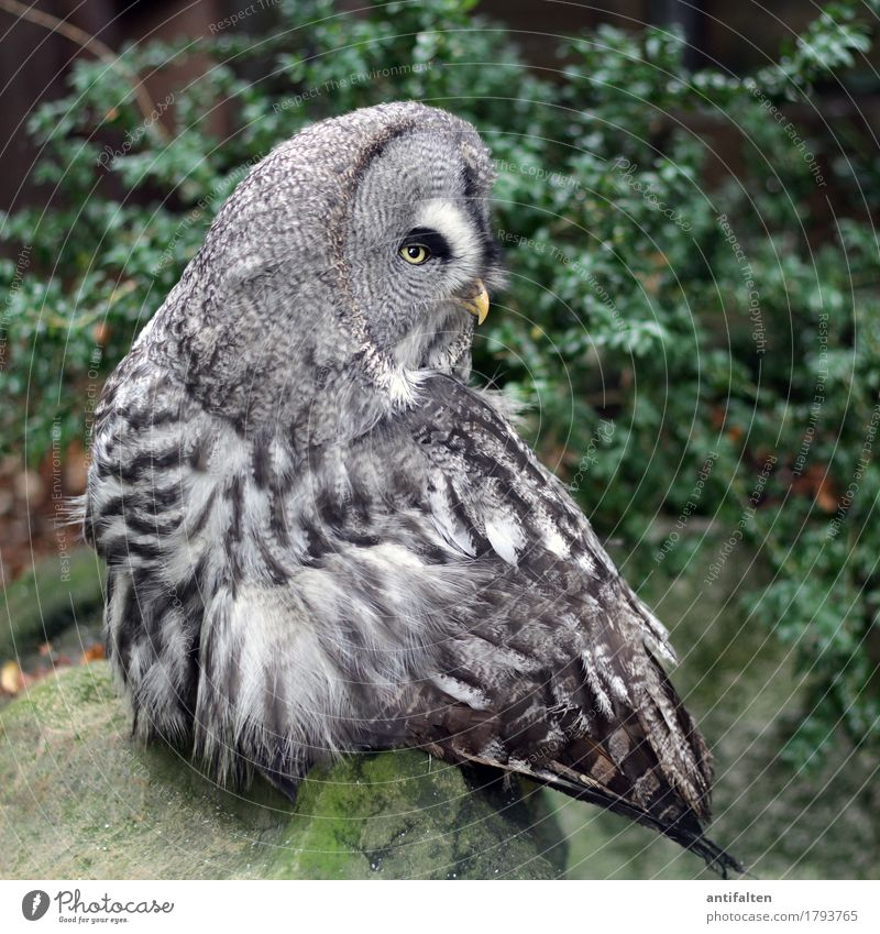 A brief look back Tourism Trip Freedom Nature Autumn Bad weather Tree Bushes Moss Park Rock Stone Wild animal Animal face Wing Claw Zoo Owl birds Eagle owl Beak