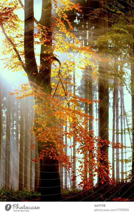 Nature Plant Blue Colour White Tree Red Leaf Forest Black Yellow Autumn Natural Gray Orange Fog