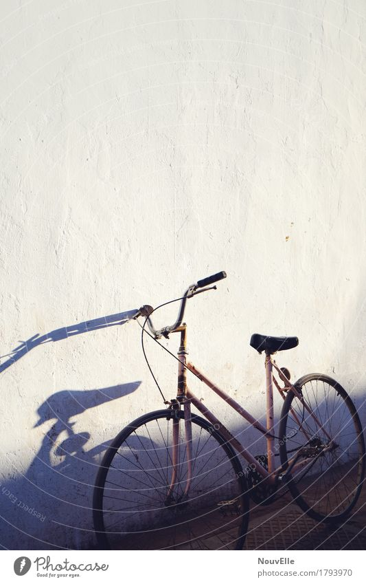 On the road in Argentina Bicycle Shadow street voyager evening mood