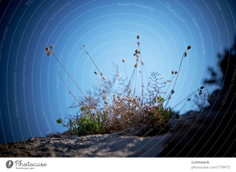 Sky Green Blue Plant Flower Animal Autumn Freedom Grass Environment Sand Air Warmth Trip Bushes Transience