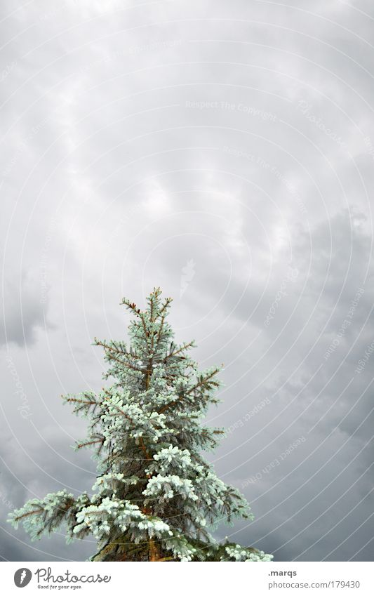 Nature Plant Tree Autumn Exceptional Climate Large Storm Freeze Storm clouds