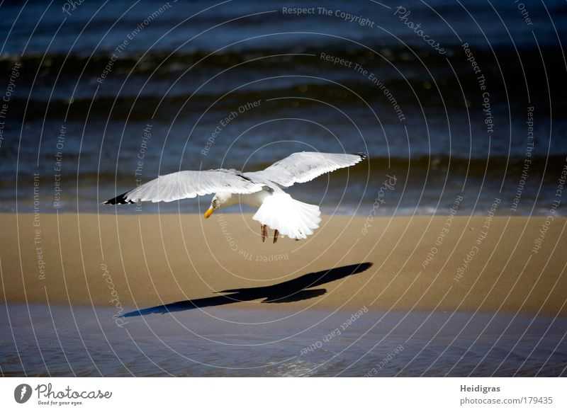 White Ocean Blue Beach Black Animal Life Moody Bird Waves Coast Flying Speed Aviation Wing Thin