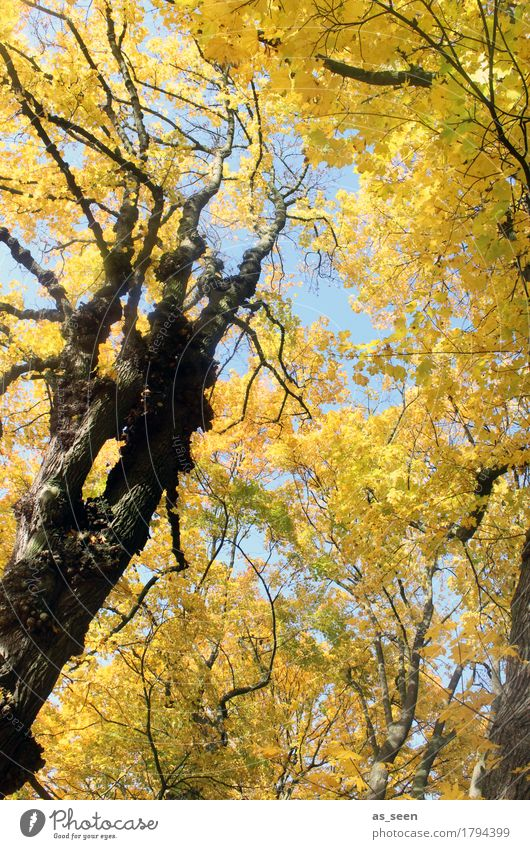 Trees in autumn Wellness Harmonious Hiking Oktoberfest Thanksgiving Environment Nature Landscape Plant Autumn Climate Beautiful weather Leaf Maple tree