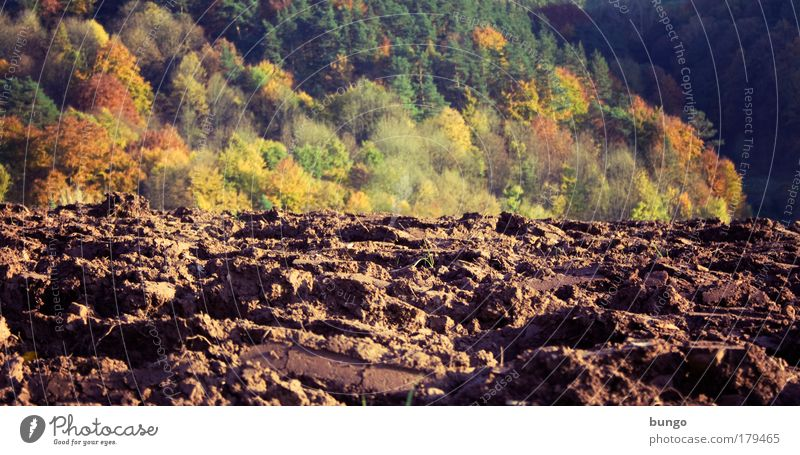 Nature Green Autumn Landscape Brown Field Environment Earth Growth Ground Change Agriculture Furrow Sowing