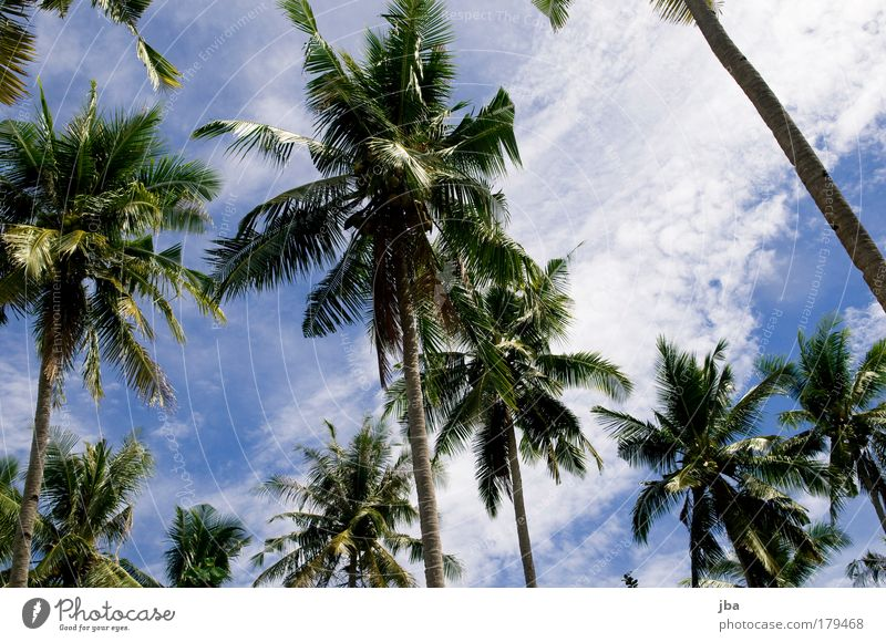 palm sky Colour photo Exterior shot Day Vacation & Travel Tourism Trip Far-off places Summer vacation Ocean Island silads Sulawesi Nature Sky Clouds Sunlight