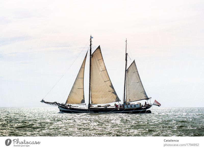 ahoy Sailing Nature Water Horizon Sunlight Summer Beautiful weather North Sea flatboat Movement Discover Glittering Esthetic Fluid Brown Gray Silver Turquoise