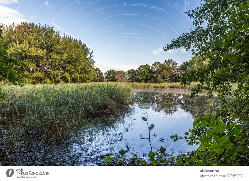 pond Nature Landscape Water Summer Pond Emotions Contentment Attentive Caution Serene Patient Calm Idyll Heiligendamm Mecklenburg-Western Pomerania Germany