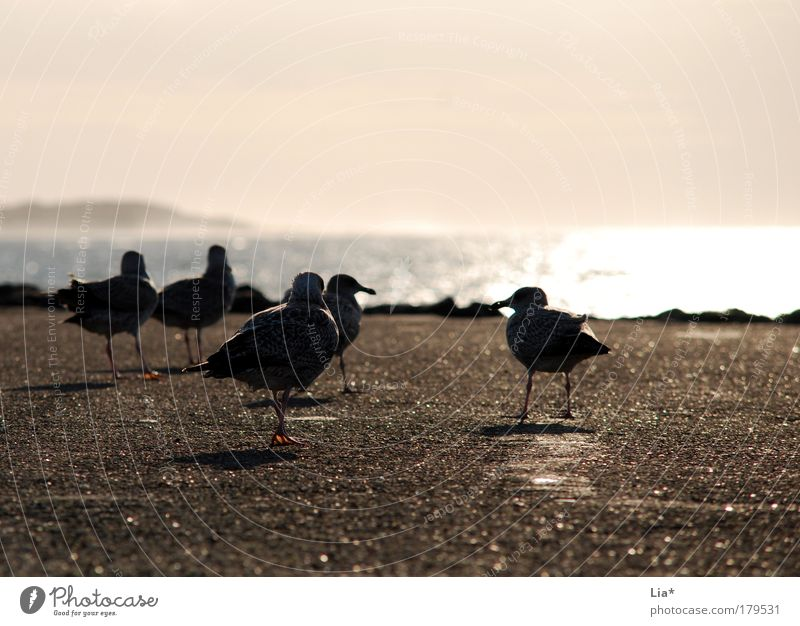farewell mood Colour photo Exterior shot Copy Space top Copy Space bottom Evening Twilight Silhouette Sunrise Sunset Back-light Bird Seagull Group of animals