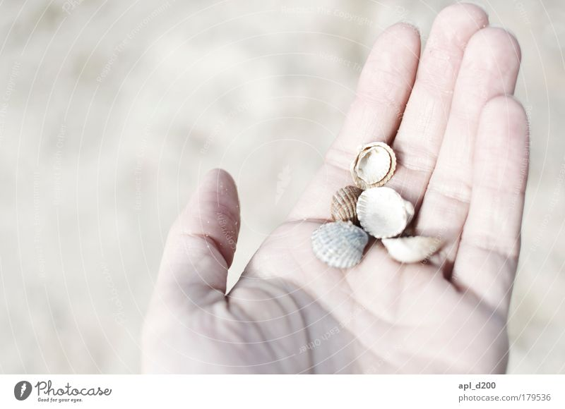 Human being Hand White Vacation & Travel Ocean Summer Beach Adults Contentment Masculine Island Esthetic Happiness Tourism To hold on 18 - 30 years