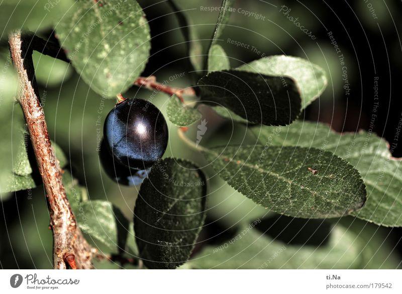 Nature Blue Green Tree Plant Leaf Animal Autumn Environment Landscape Healthy Bushes Juicy Fruit Spirits Wild plant