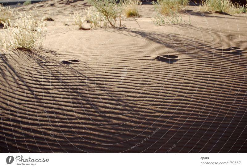 Loneliness Sand Waves Desert Tracks Footprint Drought Tuft of grass