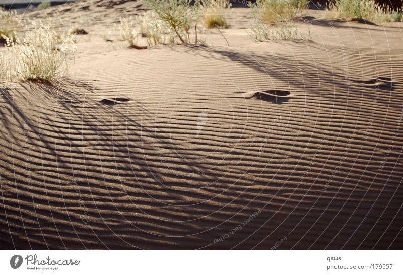 moiré Sand Morning Desert Waves Tuft of grass Structures and shapes Shadow Drought Footprint Loneliness Back-light