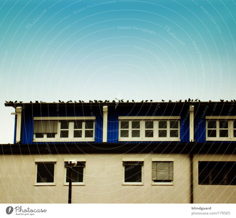 roof rally Colour photo Exterior shot Deserted Copy Space top Day High-rise Manmade structures Building Window Roof Eaves Bird Pigeon Wing Stone Concrete Glass