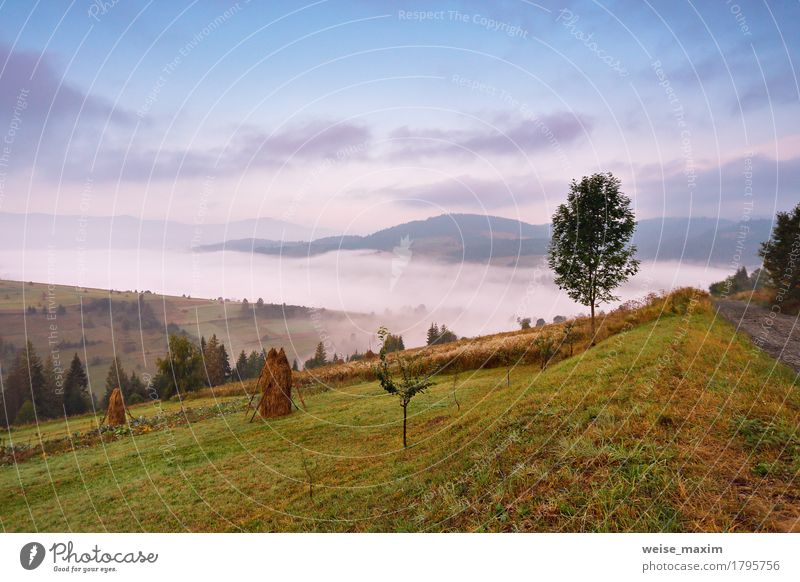 Autumn September foggy morning in mountains Sky Nature Vacation & Travel Blue Green White Tree Landscape Clouds Far-off places Forest Mountain Environment Meadow Autumn Natural