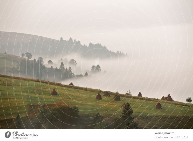 Autumn September foggy morning in mountains Nature Vacation & Travel Blue Summer Green White Tree Landscape Far-off places Forest Mountain Environment Meadow