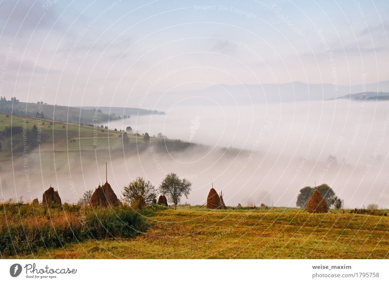 Autumn September foggy morning in mountains Vacation & Travel Tourism Trip Adventure Far-off places Freedom Mountain Hiking Environment Nature Landscape Sky