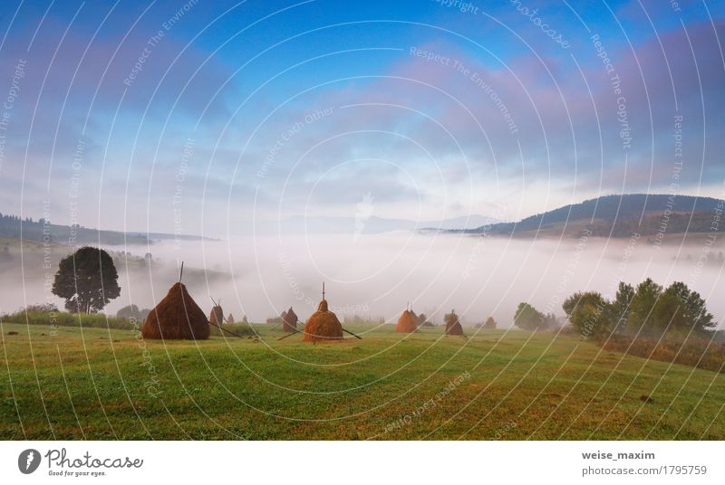 Autumn September foggy morning Beautiful Vacation & Travel Tourism Trip Adventure Far-off places Freedom Camping Mountain Environment Nature Landscape Plant Sky