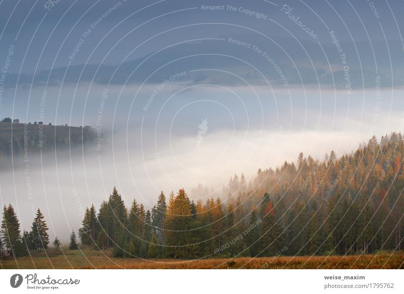 Autumn September foggy morning in mountains Vacation & Travel Tourism Trip Adventure Far-off places Freedom Mountain Environment Nature Landscape Sky Clouds Fog