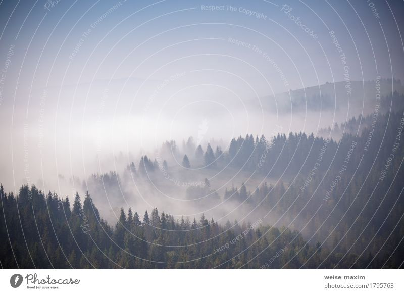 Autumn September foggy morning in mountains Sky Nature Vacation & Travel Blue Summer White Tree Landscape Clouds Far-off places Forest Mountain Environment