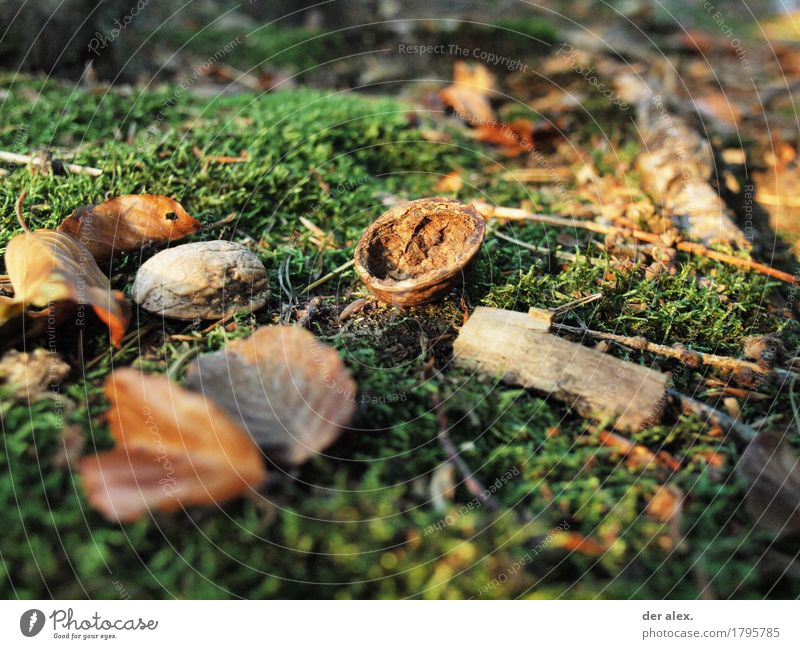 forest ground Environment Nature Earth Sunlight Autumn Climate Plant Grass Moss Wild plant foliage Wood Forest Soft Walnut Branch Woodground Colour photo