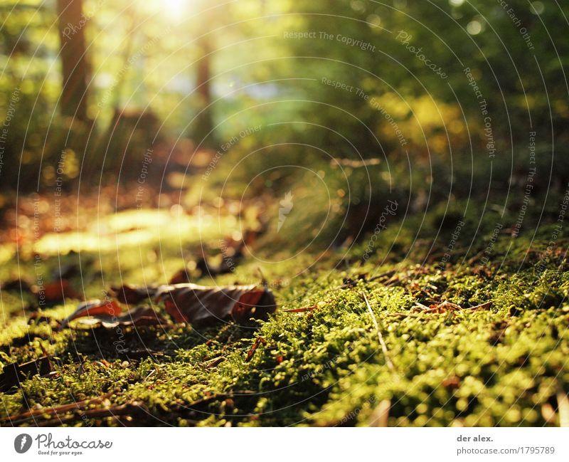 Nature Plant Green Sun Leaf Calm Forest Environment Yellow Autumn Grass Brown Illuminate Glittering Earth Hiking