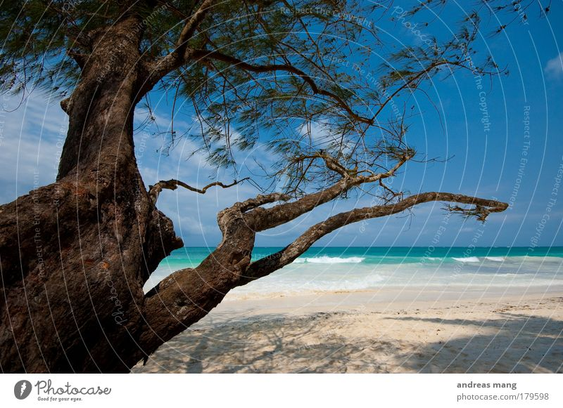 Nature Water Old Sky White Tree Ocean Blue Summer Beach Vacation & Travel Relaxation Dream Brown Coast Horizon