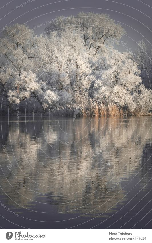 Nature White Tree Blue Plant Winter Calm Loneliness Animal Cold Snow Dream Sadness Landscape Ice Moody