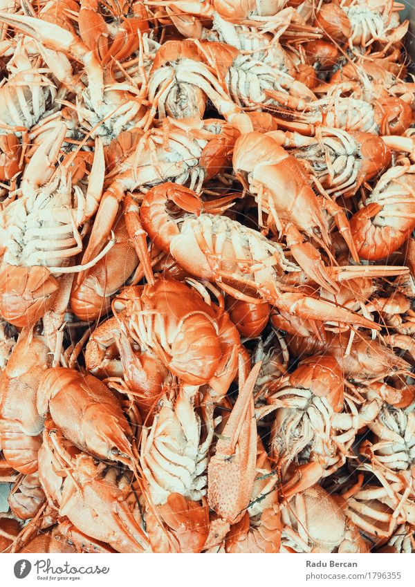 Lobsters And Shrimps For Sale In Fish Market Food Meat Seafood Nutrition Eating Lunch Dinner Organic produce Diet Healthy Eating Ocean Animal Group of animals