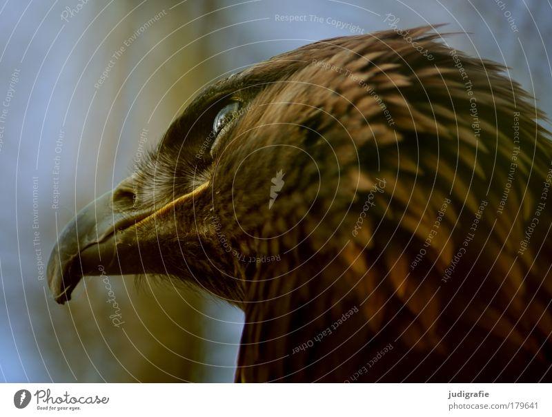 Nature Animal Bird Animal face Natural Wild animal Beak Bird of prey