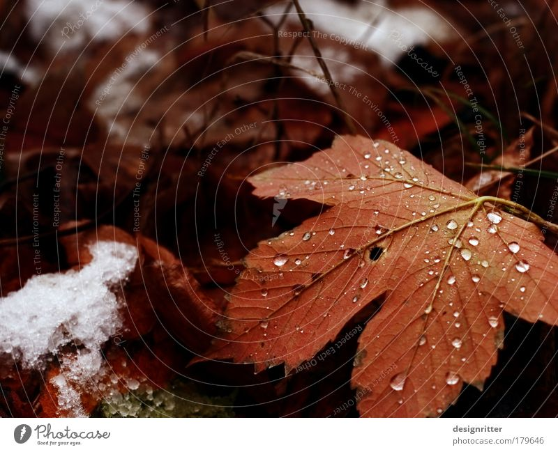 autumn type Colour photo Close-up Detail Deserted Copy Space left Copy Space top Shallow depth of field Nature Plant Water Drops of water Autumn Ice Frost Snow