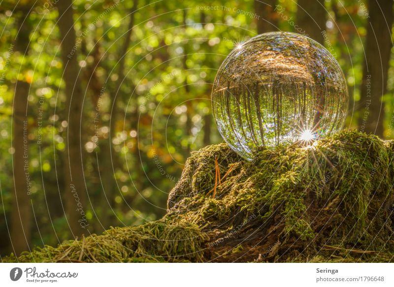 Forest magic through the glass ball Environment Nature Landscape Plant Animal Sun Sunlight Summer Autumn Tree Grass Moss Glass Sphere Moody Glass ball
