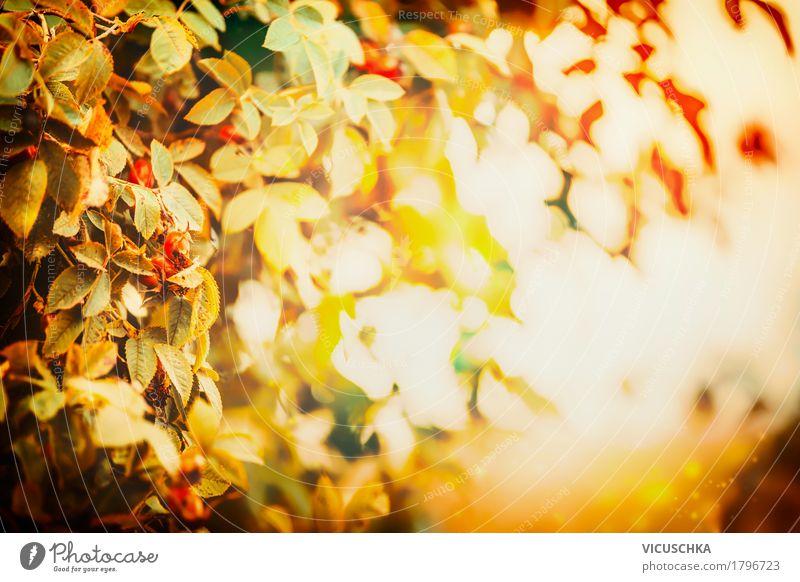 Nature Plant Tree Landscape Leaf Yellow Autumn Lifestyle Garden Design Park Bushes Beautiful weather Rose hip