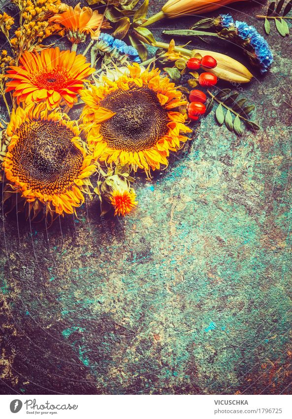 Autumn sunflowers Style Design Summer Decoration Nature Plant Flower Leaf Blossom Yellow Background picture Composing Vintage Bouquet Sunflower Card