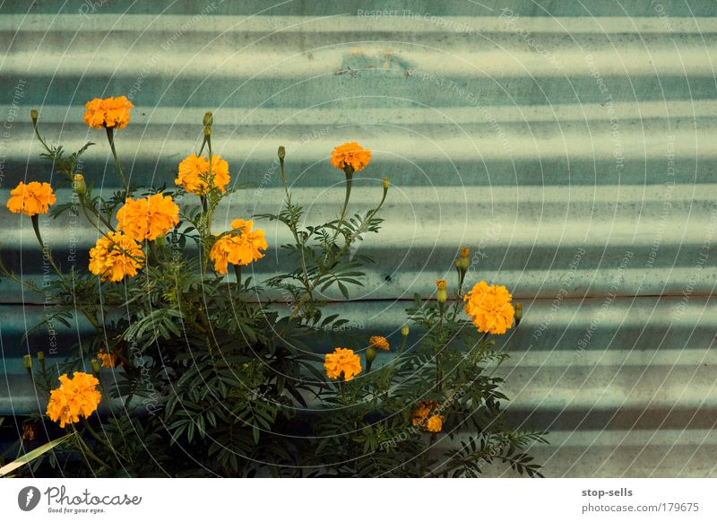Nature Plant Summer Flower Environment Autumn Wall (building) Garden Blossom Park Orange Natural Growth Fragrance Harmonious Geometry