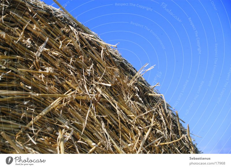 Straw Harvest Blue sky Feed Bale of straw