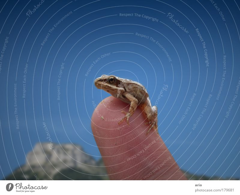 Animal Fingers Kissing Wild animal Hand Frog Cloudless sky