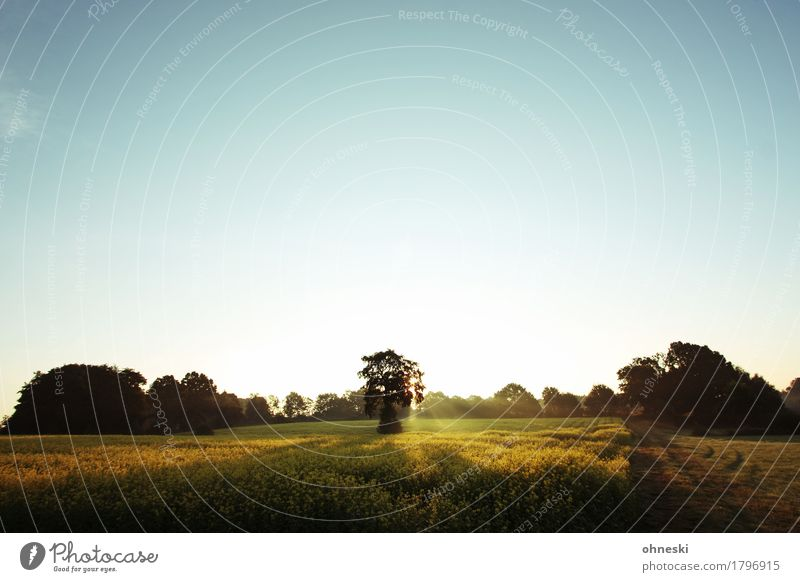 Tree Landscape Relaxation Loneliness Calm Forest Autumn Religion and faith Horizon Dream Field Idyll Joie de vivre (Vitality) Beautiful weather Hope Elements